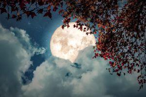 Moonlight Builds a Decentralized Workforce Platform 101