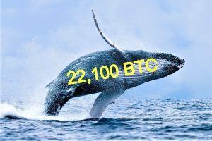 تحطم السعر البيتكوين مع تحرك الحيتان 101