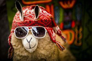 International Crypto Exchanges Move into Peruvian Market 101