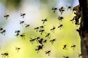 Binance's Venus and the Swarm of CorpoCoins 101
