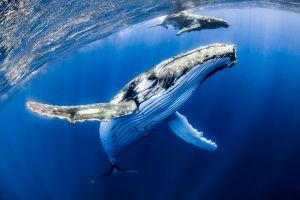 Whale Rakes in USD 9 Million as Bitcoin Market Slides 101
