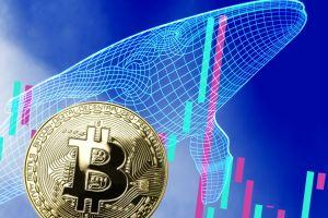 Number of Bitcoin Whales Rises, but Their Wealth 'Declines' 101