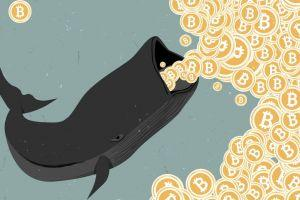 Bitcoin Whales Using 2020 to Accumulate BTC - Research 101