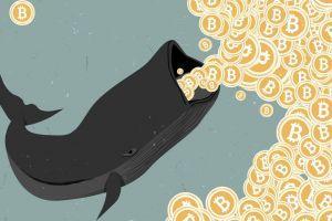 Onderzoek: Bitcoin Whales gebruiken 2020 om BTC te accumuleren 101