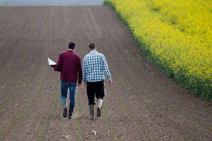 Before Correction, 70% Of Yield Farmers Planned to Stay In The Field - Survey 101