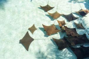 Les Bahamas lanceront demain leur monnaie numérique, le Sand 101