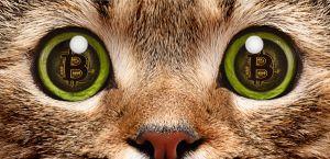 Certains chats achètent déjà leurs croquettes en Bitcoin / Adobe