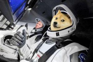 Dogecoin (DOGE) bénéficie d'un nouveau coup de pouce de Coinbase et Elon Musk 101