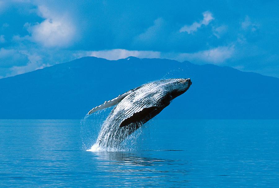 C'est quoi une baleine? 0001