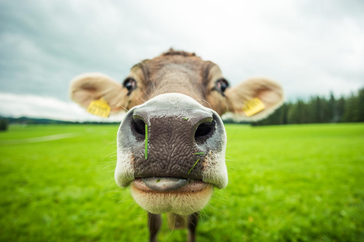 Carrefour utilise à nouveau la blockchain pour tracer son lait 0001