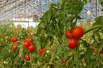 Tomates, fraises et cryptomonnaies