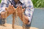 Int'l Consortium Uses Blockchain to Conduct USD12m Wheat Trade Deal