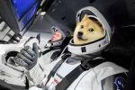 La hausse de Dogecoin (DOGE) due à un mix d'Elon Musk, DogeDay et la popularité des...