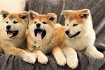 Dogecoin Wannabes Flood The Market With Pumps & Dumps