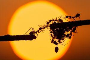 Ants Accelerate – Alibaba's Blockchain Arm Goes into Overdrive
