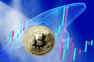 After Profitable October, Bitcoin Whales to Drive Price Up - Kraken