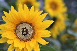 Bitcoin Market Changed 'Radically' & Volatility Decline Attracts Institutions