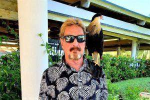McAfee's Extradition, Wood's Crypto Shopping, Coinbase In Japan + More News