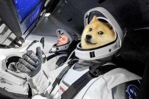 Dogecoin Fee Structure Proposal Released, Marked 'Important' by Elon Musk